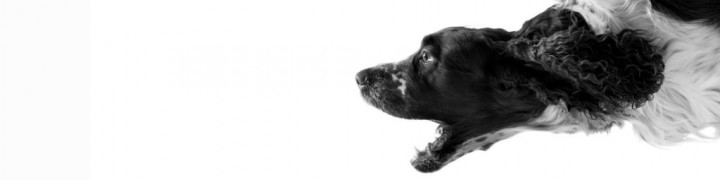 cropped-black-and-white-dog-with-white-background-hd-wallpapers-1920-x-1200-1024x640.jpg